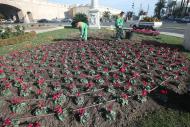 vista de una plantación de flores en la calle